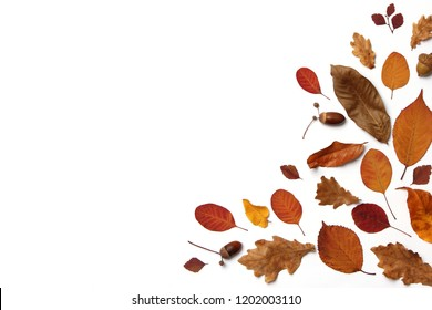 autumn composition of leaves on a white background top view. Place for text, minimalism, insta, flatlay