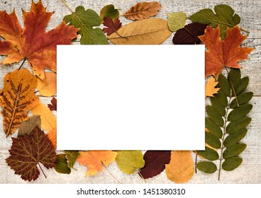 Autumn composition with leaves on a wooden background and white paper sheet with text space