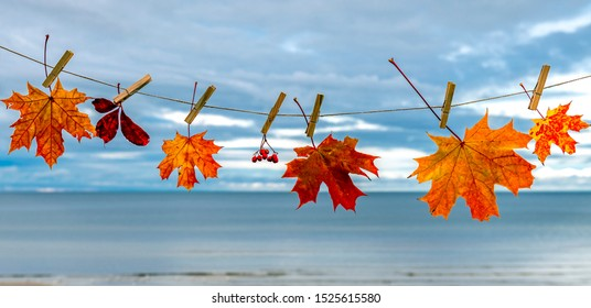 Autumn composition with maple leaves on background of the Baltic Sea, fall concept, selective focus, copy space
