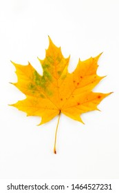 Autumn composition of maple leaves.Yellow leaf on white background.
