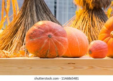 autumn composition of pumpkins