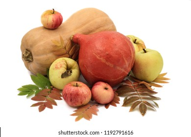 autumn composition of pumpkins and apples surrounded by Rowan leaves close - up on a white background. Big pumpkins and small apples. Vegetables on white background.