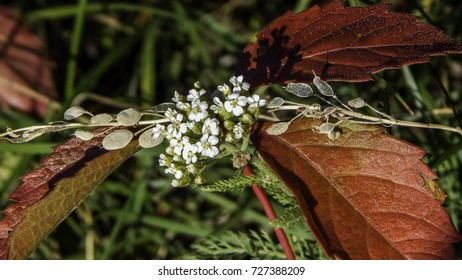Autumn composition of red leaves and white flowers