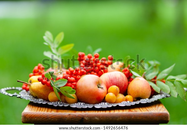 Autumn composition with ripe fruits and berries. Apples, peras, plums, mountain ash berries. Fall, harvest time, bright warm colors. Green grass on background