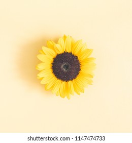 Autumn composition. Sunflower on pastel yellow background. Autumn, fall concept. Flat lay, top view, square
