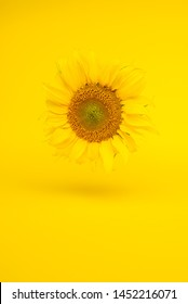 Autumn composition. Sunflower on pastel yellow background. Autumn, fall concept.