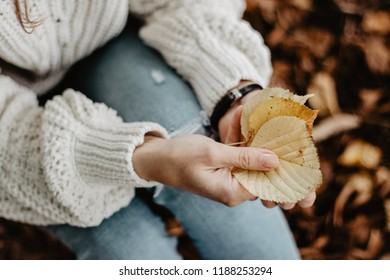 Autumn concept. Yellow leaves in woman's hands