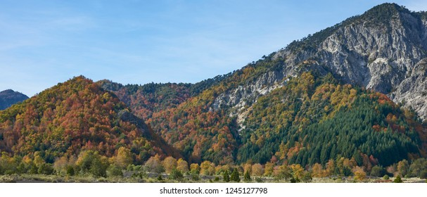 Autumn in Conguillio National Park in southern Chile. Trees in autumn foliage in the foreground; evergreen Araucania Trees (Araucaria araucana) beyond on the higher rocky mountain tops.