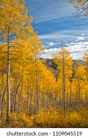 Autumn coors in the Wasatch mountains of Utah.