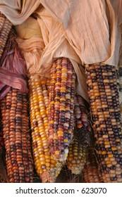 Autumn Corn with dried husks