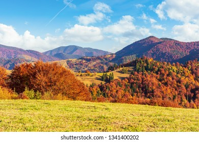 autumn countryside in mountains. grassy meadows and forested hills. wonderful nature scenery in the afternoon. vivid autumn colors and bright blue sky with fluffy clouds