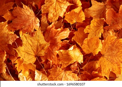 Autumn creative composition. Beautiful autumn leaves as background. Fall leaf. Flat lay, top view, copy space