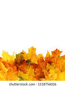 Autumn creative composition. Dried leaves isolated on white background.