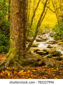 Autumn Creek in Great Smoky Mountains National Park