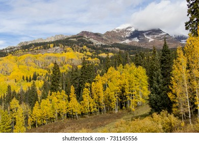 Autumn at Crested Butte in the Colorado Rockies - changing aspen trees on a foggy morning.