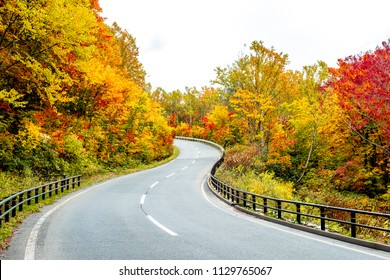 Autumn curvy road, curve fence along the road on the way through colorful trees in the forest mountain in Tohoku Japan.