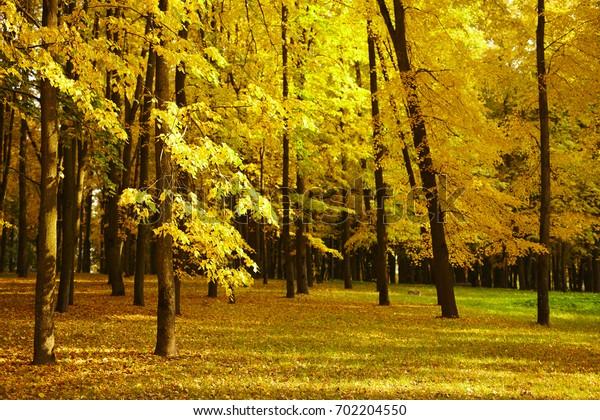 autumn days