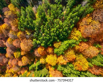 Autumn days in our country. Aerial photography.