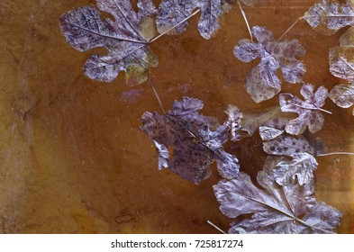Autumn Decomposing Leaves Floating on the Surface of the Water