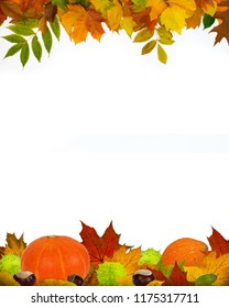 Autumn decoration made of leaves, chestnuts, acorns and pumpkins on a white background. Frame four-fifths.