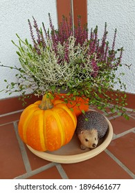 Autumn decoration with a pumpkin, a hedgehog and colorful heather in a pot