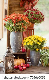 autumn decorations with chrysantemums, apples and pumpkin