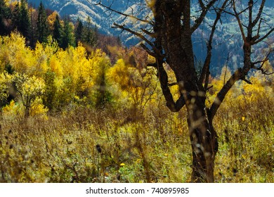 Autumn deep forest with rays of warm illumining through the leaves. Mountaine paths and roads in the autumn landscape.