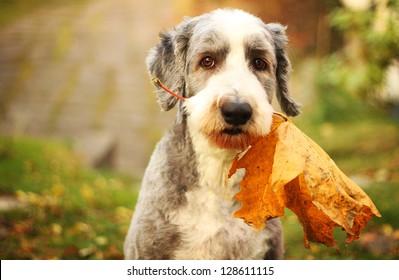 Autumn dog