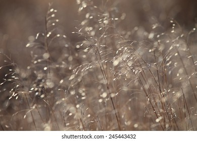 Autumn dry grass.