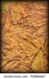 Autumn Dry Maple Leaves Backdrop Vignetted Grunge Texture