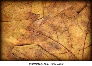 Autumn Dry Maple Leaves Vignetted Grunge Background Texture