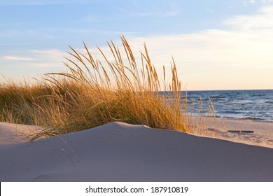 Autumn Dune Grass. Beach grasses turn golden brown in autumn and sway in the late day breeze along the shores of Lake Michigan