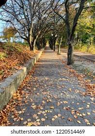 Autumn empty way