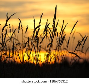 Autumn evening landscape with reeds against the sunset background