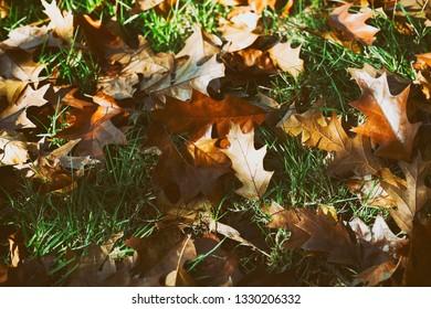 Autumn Fading Beauty