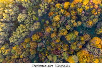 Autumn fall colors in forest. Aerial view over forest with vibrant autumn colors. Above aerial drone view of forest with green yellow orange and purlple colored trees. Top down view of fall foliage.