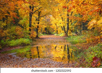 Autumn Fall Forest Country Road October