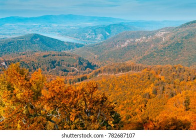 Autumn or fall forest view in the mountains, deciduous forest landscape