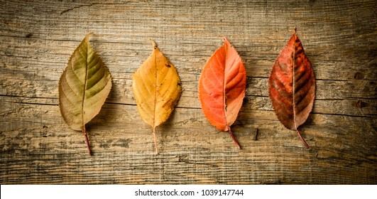 Autumn (fall) - four colorful leaves captured from above (top view, flat lay). Rustic wooden background.