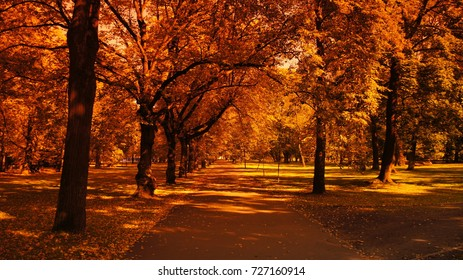 Autumn fall Gold with Leaves Trees in a beautiful park with sun day