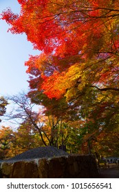 autumn Fall of Kyoto Fall of Japan