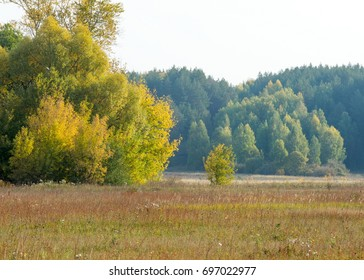 autumn, fall, leaf fall, fall of the leaf. the third season of the year, when crops and fruits are gathered and leaves fall