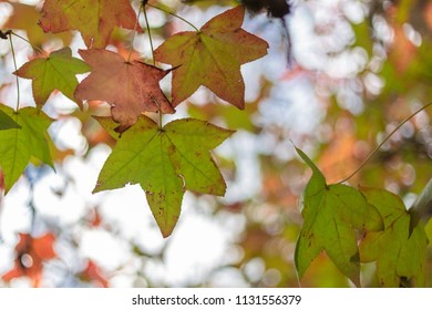 Autumn / fall leaves