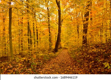 autumn fall leaves forest colorful