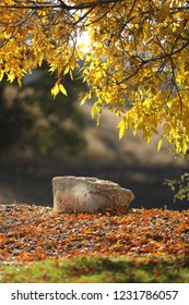 Autumn fall leaves turning yellow and a large rock for a portrait background backdrop.