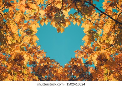 Autumn fall love background. Orange and yellow leaves in heart shape of background of blue sky. Heart-shaped sky through autumn trees in the park.