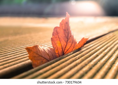 Autumn, fall, red sycamore leaf trapped and falling through the gaps in a wooden patio decking, the morning sunlight illuminates it from behind.  Taken at a low angle.