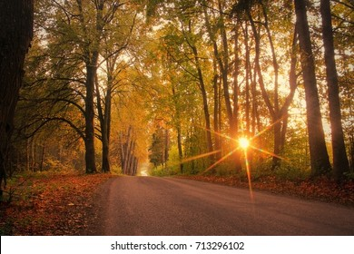 Autumn, fall scene. Autumnal landscape with empty countryside road and colored trees.  Sun shining through the trees. Sunset or sunrise light. September, October, November concept. Soft focus.