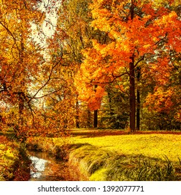 Autumn. Fall scene. Countryside landscape with red and yellow maple leaves, trees and meadow.