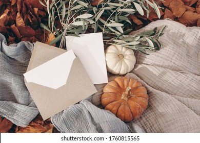 Autumn, fall stationery mockup scene. Blank greeting cards, invitation, craft paper envelope, olive branches, pumpkins on muslin plaid.  Dry red beech leafs ground in sunlight. Thanksgiving concept.